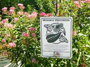 Butterfly Monarch Waystation